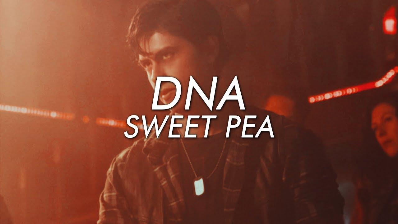 Sweet Pea || DNA