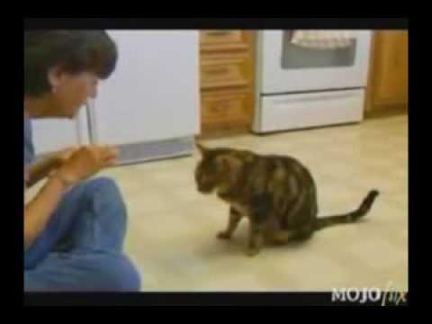 Подборка умных котов - Лучшие приколы. Самое прикольное смешное видео!