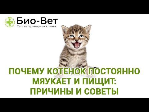 Как успокоить котенка когда мяукает