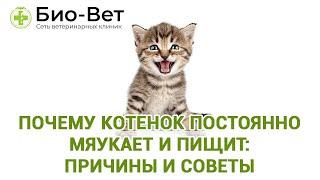 Почему котенок постоянно мяукает и пищит: причины и советы. Ветеринарная клиника Био-Вет.