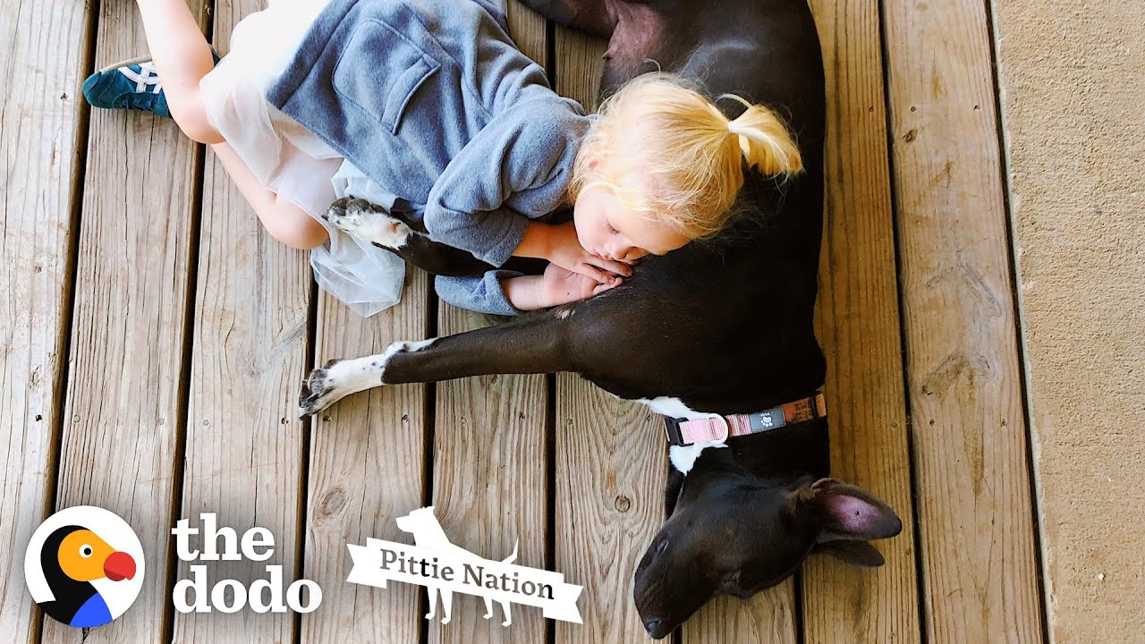 Little Girl's Friendship With Her Pit Bull Is The Purest Thing Ever | The Dodo Pittie Nation
