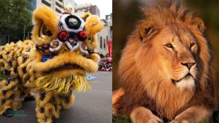 What Is Chinese Lion Dancing
