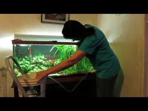 How To Easily Vacuum The Gravel In A Planted Aquarium