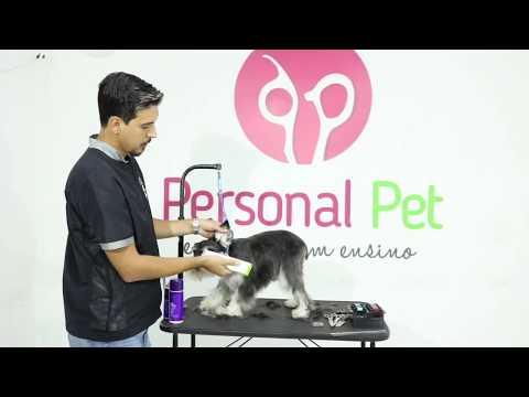 Tosa em Schnauzer Passo a Passo - Curso de Banho e Tosa Personal Pet Escola