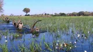 I dreamed of Africa (Ayub Ogada - Obiero) befa