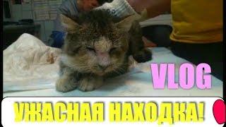 СПАСЕНИЕ КОТА ЯПОНЧИКА ОТ СМЕРТИ! Нашли умирающего кота! Кот без лица!