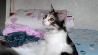 Как кошка лежит  и ей говорят
