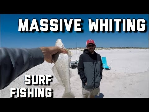 Surf Fishing- The BIGGEST Whiting I'ver Ever Seen!!- Pompano Fishing