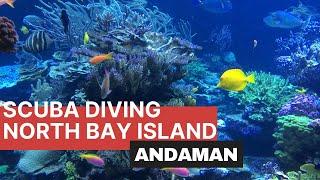 Scuba Diving North Bay Island , Andaman ( India)