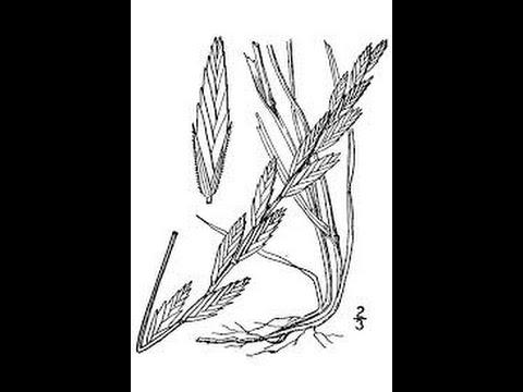 Range Plants: Grass ID Part 1
