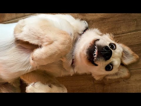 ? Funniest ? Dogs and ? Cats - Awesome Funny Pet Animals Life Videos ?