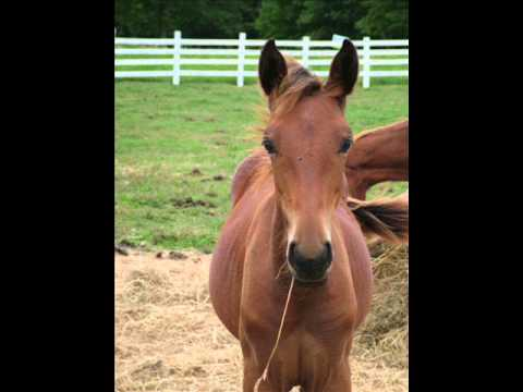 Capitan Jack, Weanling Horse Colt