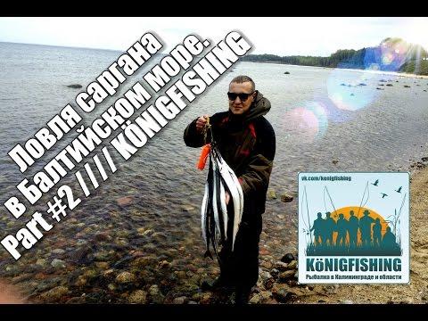 Рыбалка в Калининграде //// Ловля саргана в Балтийском море. Part #2 ////KÖNIGFISHING