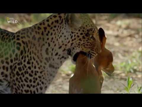 Окаванго: река мечты 3 серия - Ад