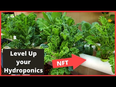 Level Up Your Hydroponics, Growing Kale in an NFT System