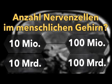Wie viele Nervenzellen gibt es im Gehirn? - Marcos Quizshow (Ep.39)