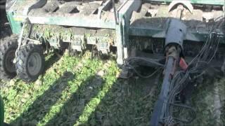 2011 Sugar Beet Harvest Stoutenburg Farms.wmv
