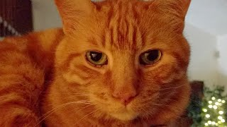 Kitten Close Up 2017-08-04 thumbnail