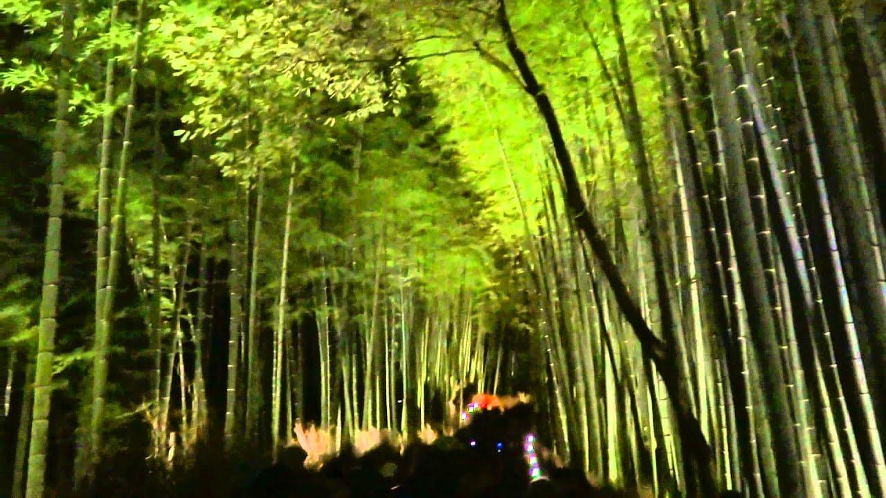 【京都・嵐山】花灯路 竹林の小径 - YouTube