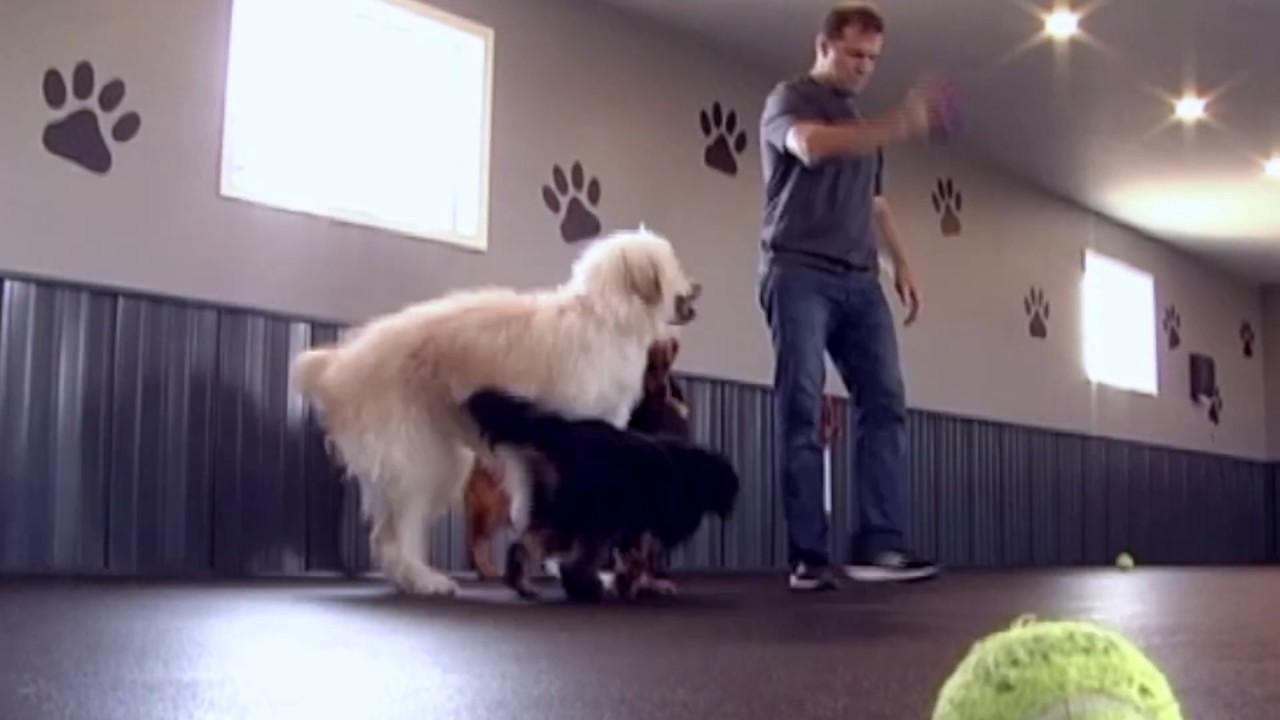 Affordable Dog Daycare Rubber Rolls