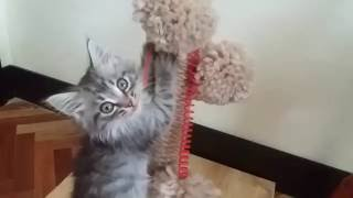 Как сделать когтеточку для кота своими руками