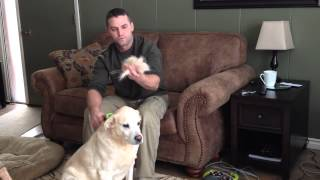 How To Remove Unwanted Dog Hair from and Old Dog video by GranPaws