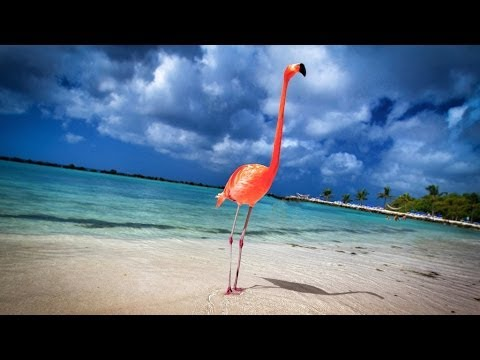 Aruba: 19 Miles of Happiness - 4K | DEVINSUPERTRAMP