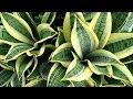 Какие комнатные растения полезны для дома? GuberniaTV