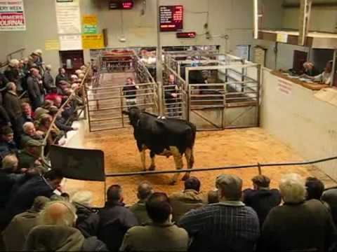 The County Clare Cattle Mart