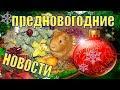 Предновогодние новости/Новогодние подарки/Утренник в садике