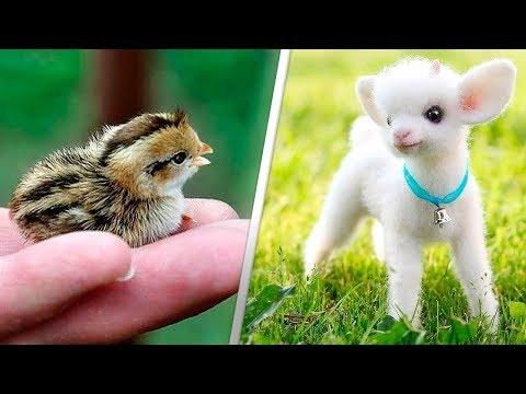 Dünyanın En Tatlı ve En Şirin 12 Yavru Hayvanı