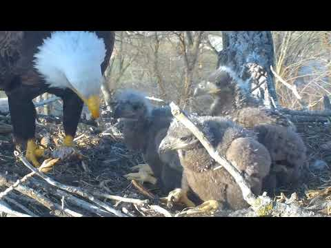 Decorah Eagles - Fish, fish, FISH!! - 04-29-18