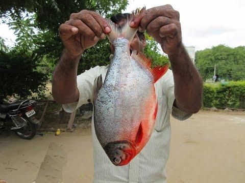 Cooking Big Fish in My Village | Prepare my mummy | VILLAGE FOOD
