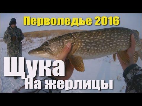 Cмотреть видео онлайн Зимняя рыбалка. РАЗДАЧА ЩУКИ НА ЖЕРЛИЦЫ. Перволедье 2016.