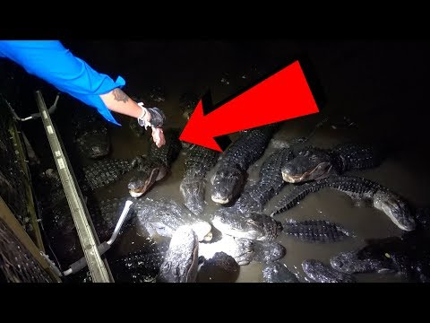 DO NOT FEED GATORS AT 3AM (OVERNIGHT CHALLENGE AT GATORLAND) | OmarGoshTV