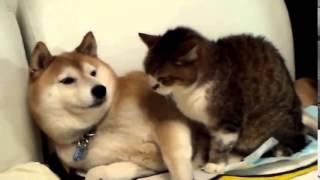 Любовь Собака и Кошка Смешное видео