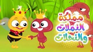 كليب مملكة النملات والنحلات | قناة كيوي - kiwi tv