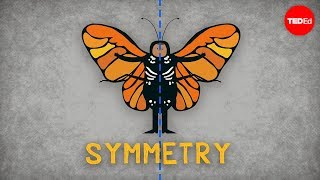 The Science Of Symmetry - Colm Kelleher