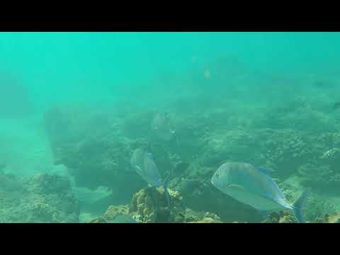Snorkeling with a GoPro5 in Kaanapali Beach, Maui 2017