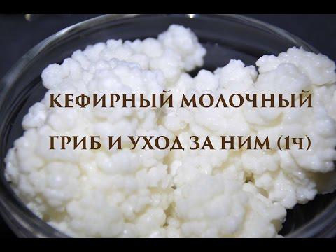 Морской рис: свойства. Индийский морской рис: полезные