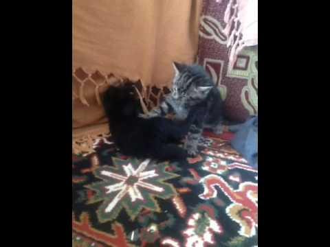 My Kittens Fighting! 💝