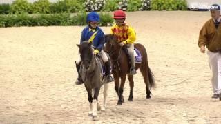 Shetland Pony Race!