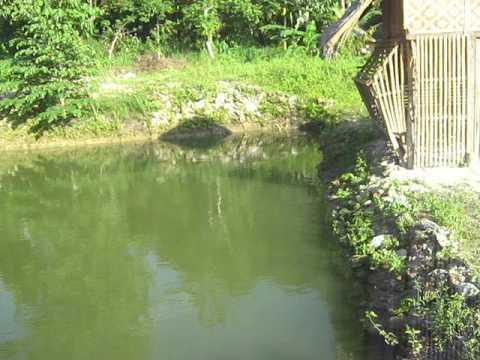Bohol Province Multi-Species Freshwater Fish Farm@BISU Bilar