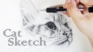 Cat Sketch「 Realistic Cat Drawing 」Draw a Cat  - 貓 素描 手繪 畫 Dessiner un Chat 鉛筆畫
