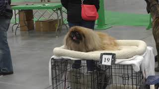 Kennel Club's Annual Dog Show Held in St. Cloud
