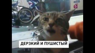 Подборка приколов 2016. Ржака, жесть, смешно, угар. Смотреть всем!!!