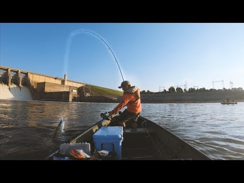 striper-fishing-|-they-are-here-and-hungry!-top-water-action---oow-outdoors