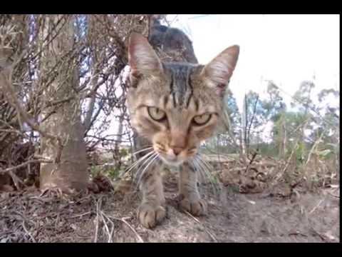 Lytro Illum - Cat - Brazil