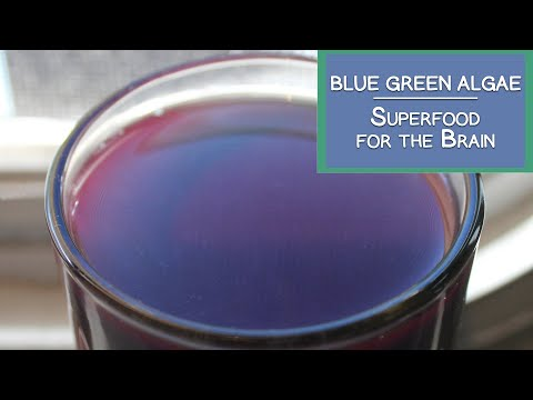 Blue Green Algae, A Superfood for the Brain and More
