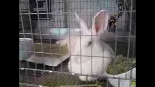 Raising Rabbits, September, 2013 Update